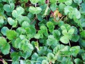 herbal stamina pria kumpulan artikel tips stamina pria laman 2